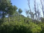 perham creek trail