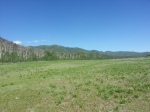 Meadow along Perham Creek trail