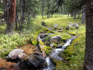 Stream on way to Capitol Lake
