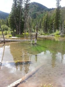 Beaver Dam pond on way to Capitol Lake