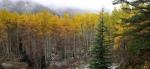 aspen trees snowmass lake trail
