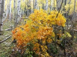 snowmass lake trail fall tree