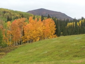 Aspens on Kebler Pass