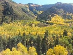 Castle Creek Fall Aspens