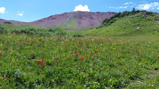 wildfloers - crested butte hike