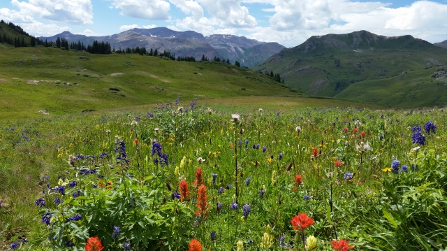Wildflowers en route to crested butte
