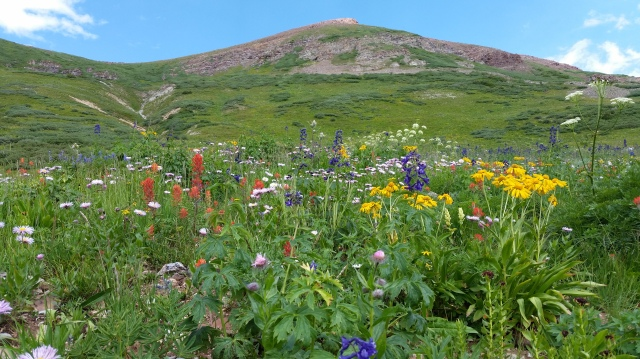 Wildflowers on the Crested Butte hike